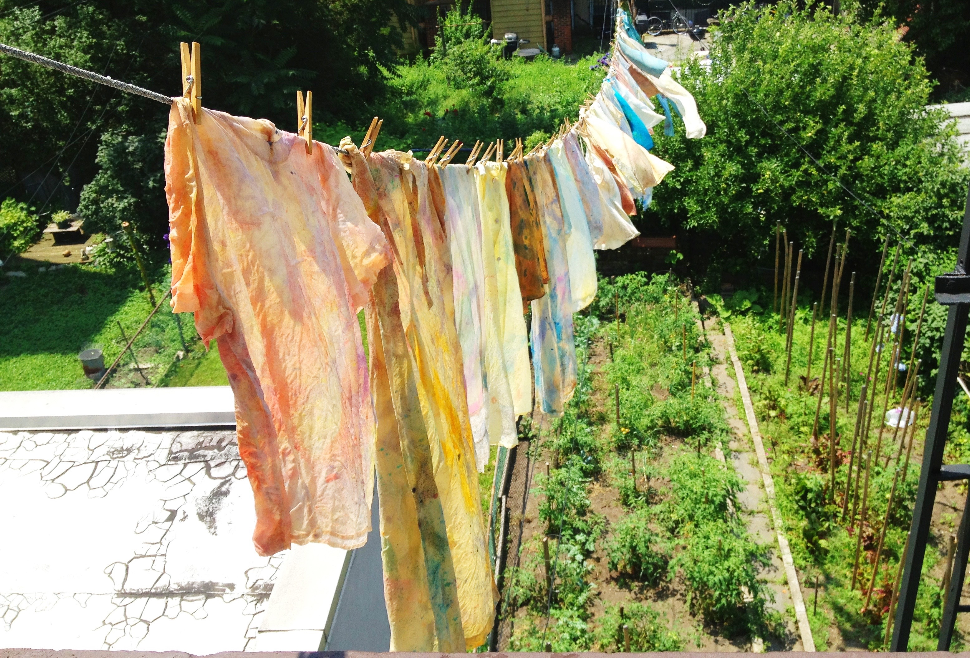 Newly dyed silks air-drying over Nova's backyard garden.